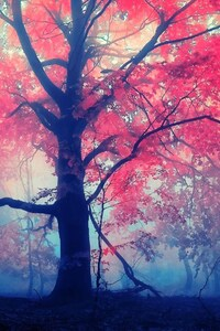 240x400 Red Leaves Tree