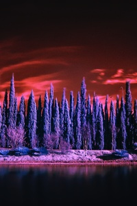 Red Sky Under Purple Trees 4k