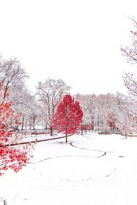 1280x2120 Red Winter Central Park 5k