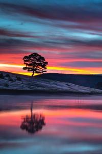1080x2280 Reflection Tree Body 8k