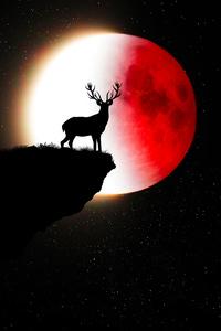 Reindeer Red White Moon 5k