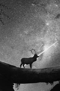 Reindeer Shooting Star