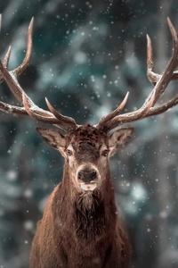 1080x2160 Reinderr Snow 4k