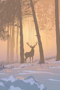 Reinnder Forest Foggy Morning 5k