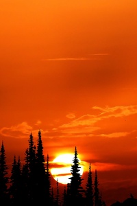 1440x2960 Relaxing Orange Sunset Evening 4k