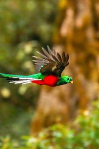 480x800 Resplendent Quetzal 4k