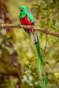 480x800 Resplendent Quetzal Bird 4k