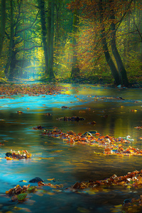800x1280 River Sunbeam Autumn 4k