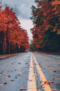640x1136 Road Between Autumn Trees 5k