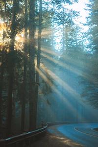 360x640 Road Sunbeams Between Trees 4k
