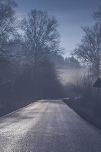 360x640 Road Tree Mist 5k