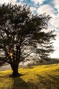 Romania Sky Light