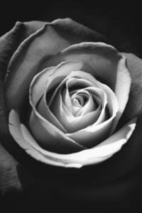 Rose Dark 5k