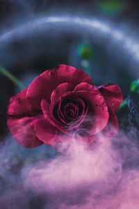2160x3840 Rose Dreamy 4k