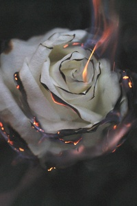 1125x2436 Rose Fire Photography Smoke
