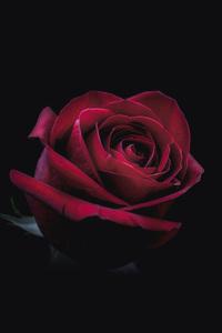 320x480 Rose Oled 8k