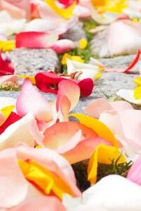 320x480 Rose Petals