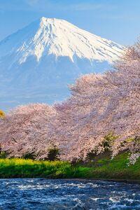 320x480 Sakura River japan