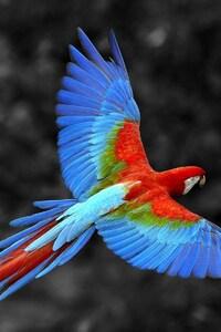 540x960 Scarlet Macaw Bird