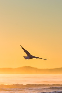 640x960 Sea Gull Flying In Epic Sunshine 5k