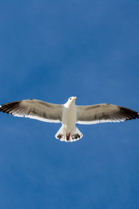 Seagull 5k
