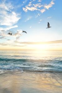 Seagull Flying Over Shore 5k