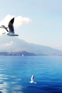 240x320 Seagulls In Switzerland