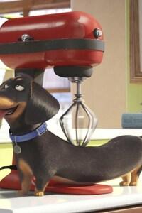750x1334 Secrete Life of Pets Movie