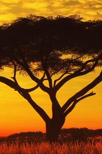 480x800 Serengeti Sunset 4k