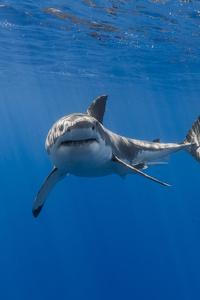 Shark 5k