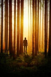 2160x3840 Silhouette Of A Man In Woods Covered By Tress Sunbeams