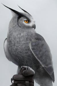 640x960 Silver Horned Owl