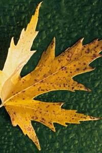 1080x1920 Simple Leaf