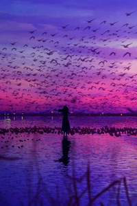 540x960 Sky Is The Stage And Birds Sing