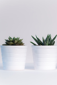 480x854 Small Plants In White Pots