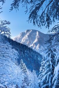 1242x2688 Snow Alps Austria 5k