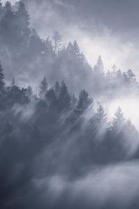 1080x1920 Snow Fog Trees 5k
