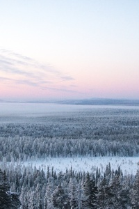 1440x2560 Snow Plant Treeline 4k