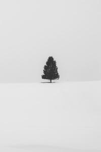 Snow Tree Minimal 5k