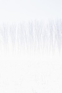 240x320 Snow Trees Abstract