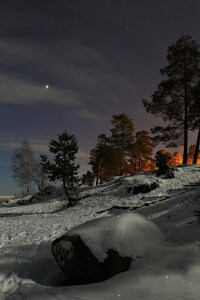 Snow Trees Photography