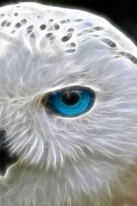 Snowly Owl Art