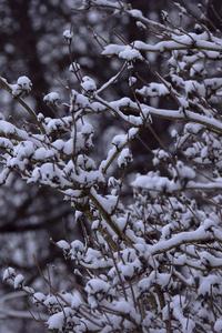 480x800 Snowy Branches 5k