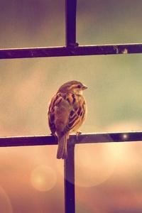 Sparrow Sitting On Railing 4k