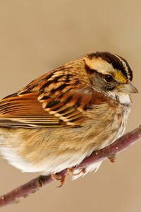 240x320 Sparrow