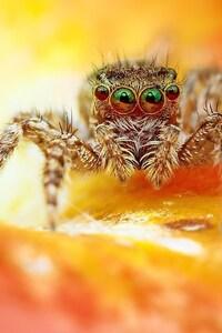 480x854 Spider Macro