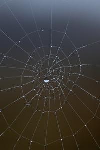 Spider Web Water Drop 5k