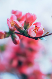 320x480 Spring Blossom 4k
