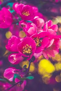 750x1334 Spring Flowers 5k