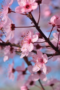 Spring Season Flowers